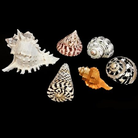 We have quite a beautiful collection of shells available.